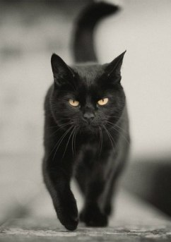 black-cats-awesomelycute.com-15
